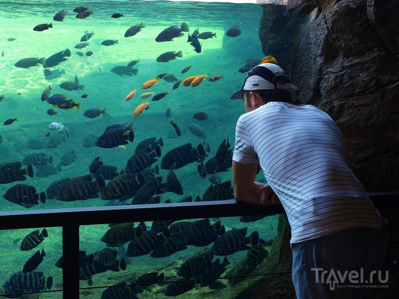 Наблюдение за рыбами / Испания