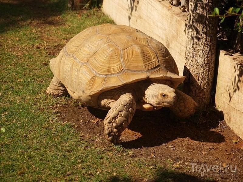 Гигантская черепаха / Испания
