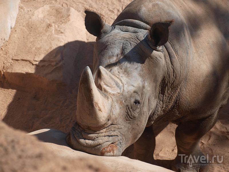 Портрет носорога / Испания