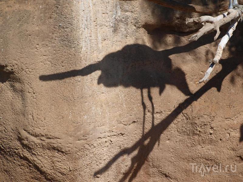 Тень от сидящей птицы / Испания