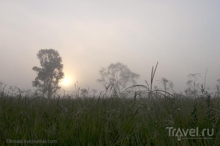Вид с хайвея Брисбен - Кернс  / Австралия