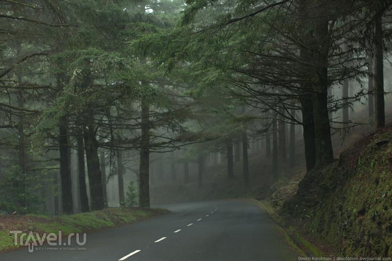 Лесной серпантин / Португалия