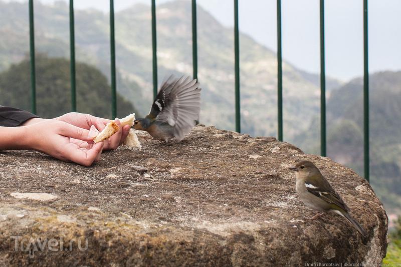 Жертвоприношение птицам / Португалия