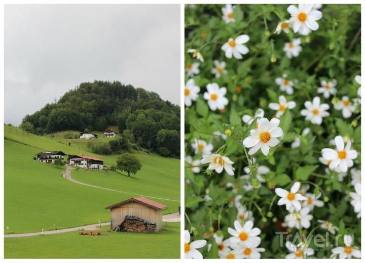 Тропинки и цветы / Австрия