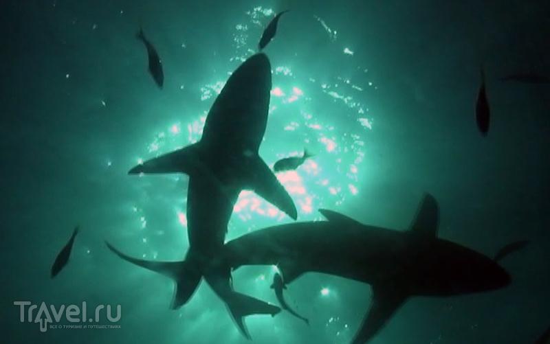 ЮАР. Умкомаас. Чернопёрые акулы / ЮАР