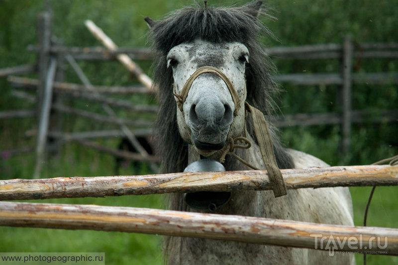 Один день из жизни эвенской семьи коневодов / Россия