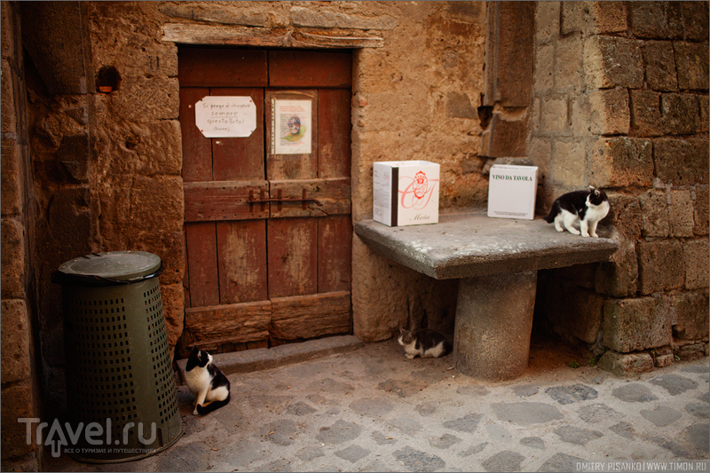 Обитель двух бабушек и двадцати кошек / Италия