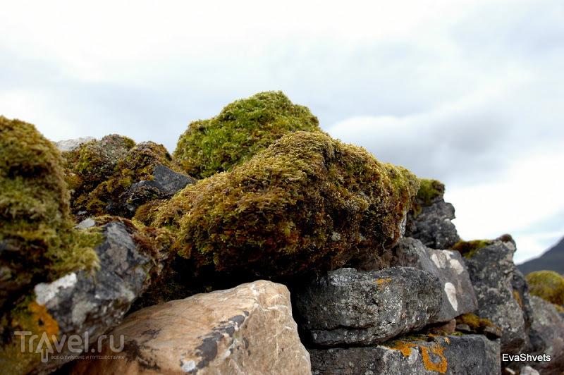 Шотландия: руины замка Ardvreck клана Маклаудов / Фото из Великобритании