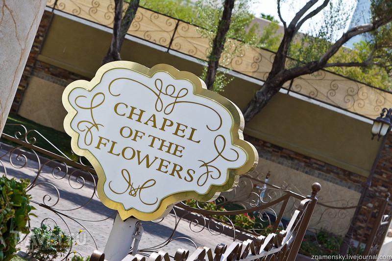 USA Wedding Trip: Дневной Лас-Вегас / США