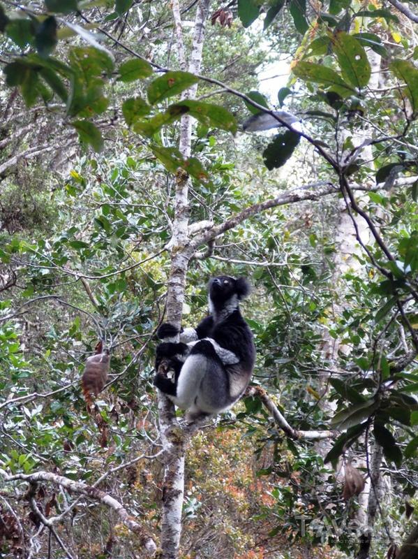 Мадагаскар. Лемуры. Часть 2 / Мадагаскар