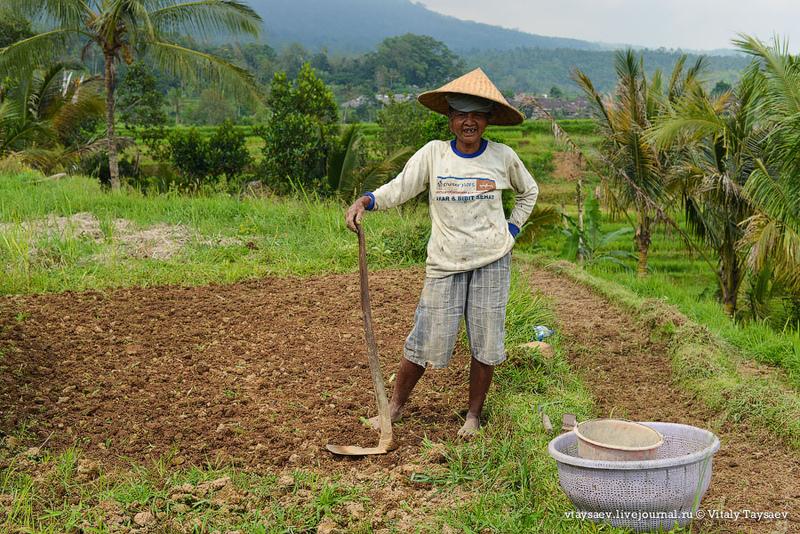 Рисовые террасы Джатилувих - Всемирное наследие ЮНЕСКО / Фото из Индонезии