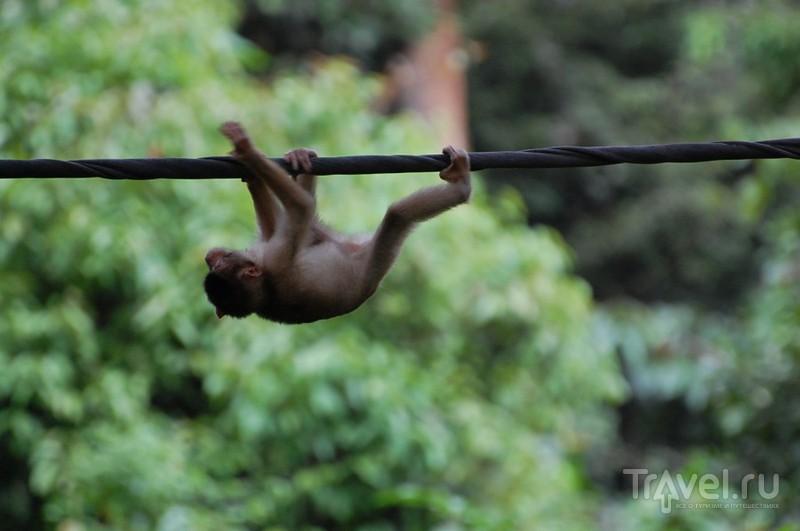 Борнео: Сепилок / Фото из Малайзии