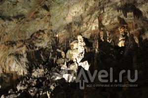 Словения, Постойнская пещера / Словения