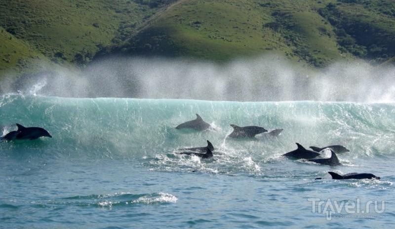 Гонка Сардин 2012 / ЮАР