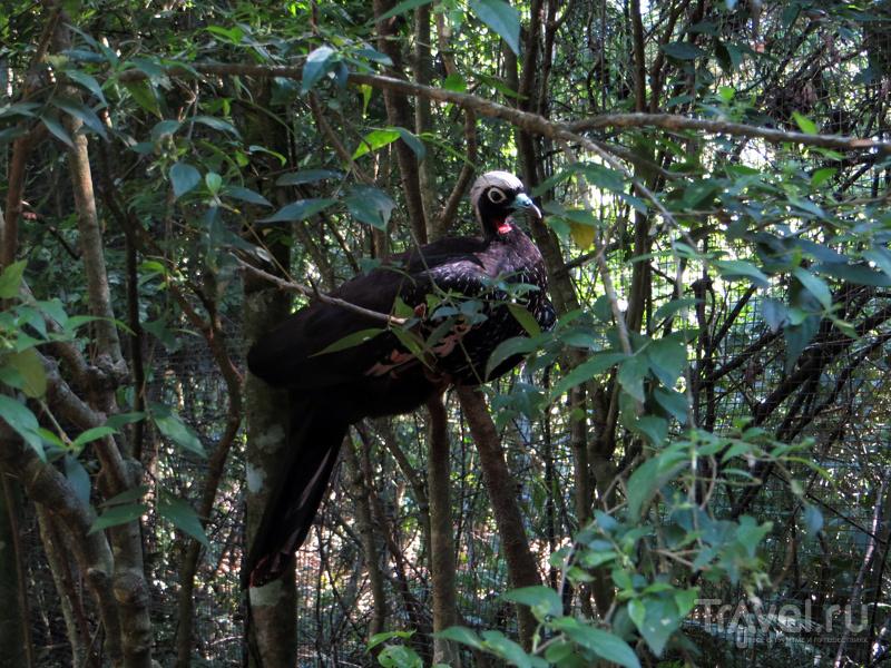 Парк птиц, Бразилия / Фото из Бразилии
