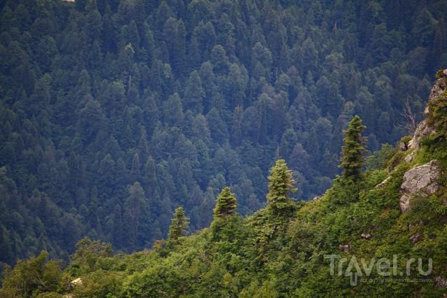 Ацетугские озера / Абхазия