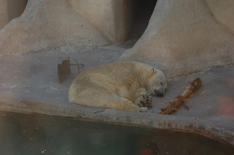 Рижский зоопарк / Латвия