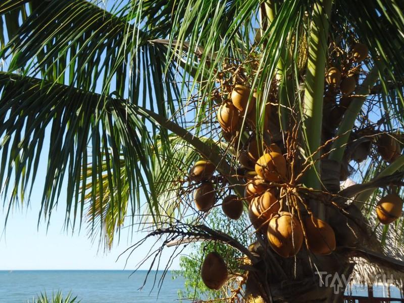 Мадагаскар. Что как растёт / Мадагаскар