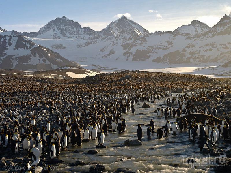 Знаю я, есть края, походи, поищи-ка, попробуй... / Фолклендские острова