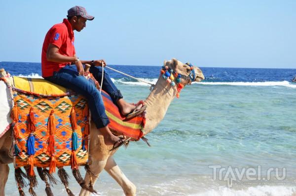 Хургада для детей / Египет