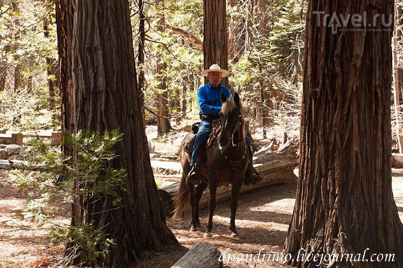 Yosemite National Park / США