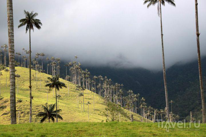 Долина Кокора. Колумбия / Колумбия