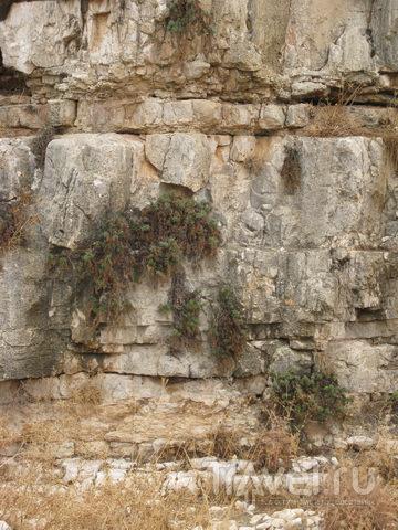 Каменный муравейник / Израиль