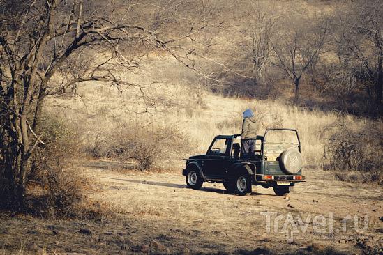 Incredible India. Как мы пытались познакомиться с тиграми / Индия