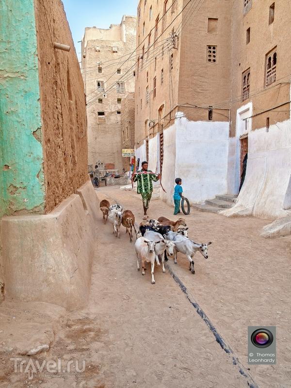 В глиняных небоскребах Шибама местные жители могли укрыться от набегов разбойников-бедуинов / Йемен