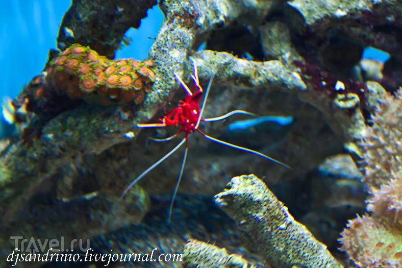 Monterey Bay Aquarium, CA / США