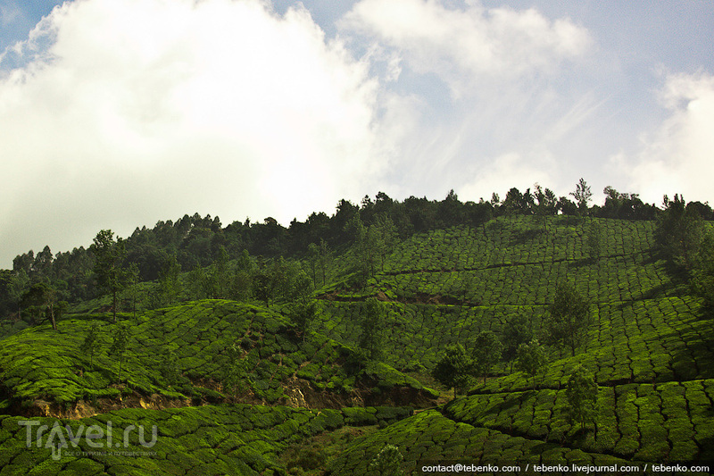 Индия. Керала. Часть 3. Горы Гхат, Муннар и чайные плантации / Индия