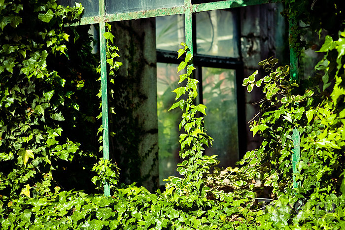 Jardim Botanico Tropical. Белен / Фото из Португалии