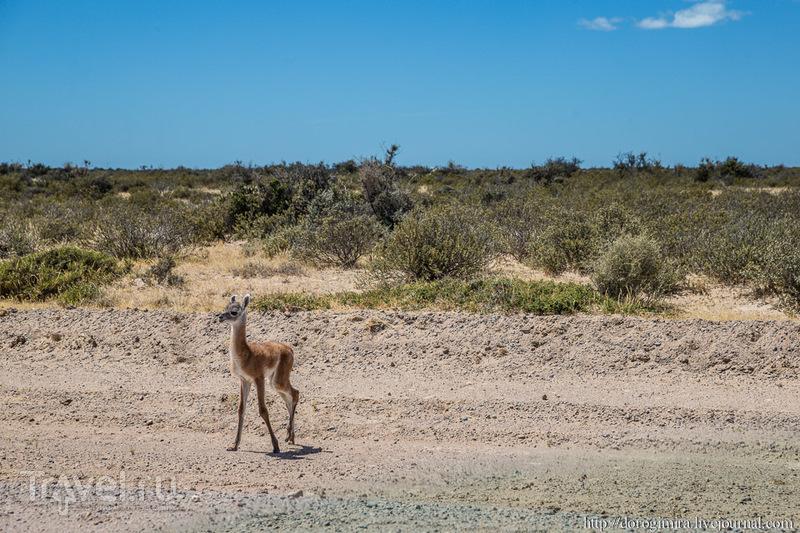 В мире аргентинских животных / Аргентина