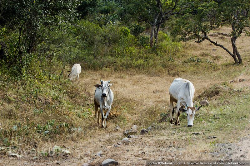 Индия. Керала. Часть 4. Индийское сафари / Индия