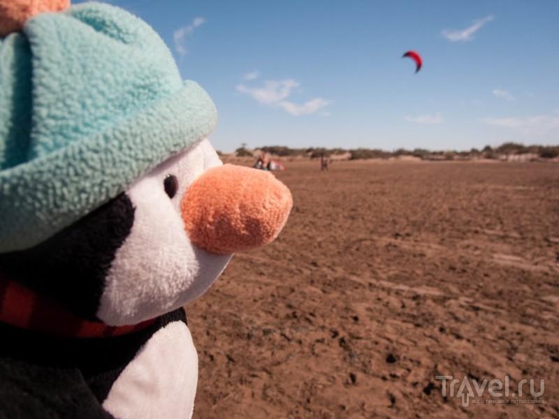 Дельта реки Эбро - гектары рисовых полей, журавли и маяк / Фото из Испании