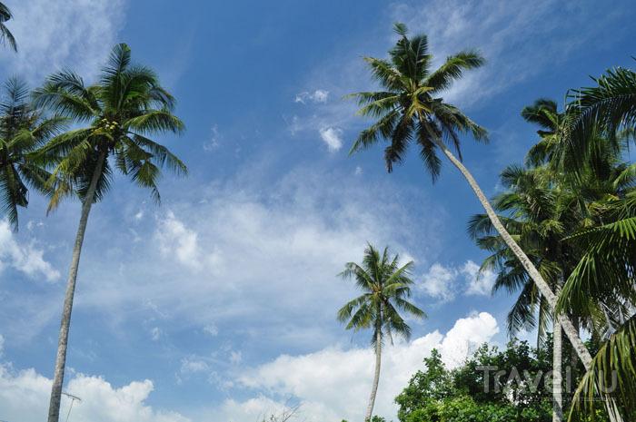 Непляжный Пенанг / Фото из Малайзии