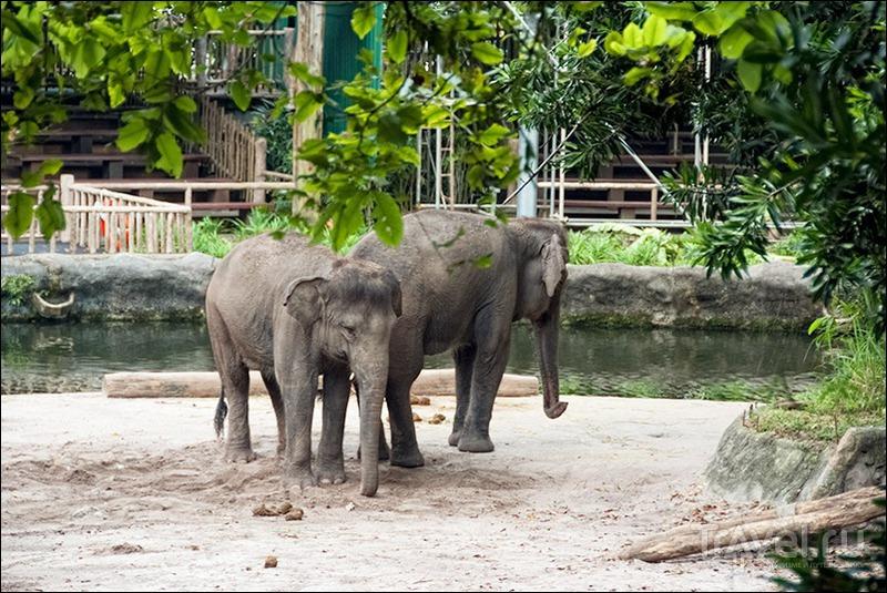 Прогулки по Сингапуру: зоопарк и ночное сафари / Фото из Сингапура