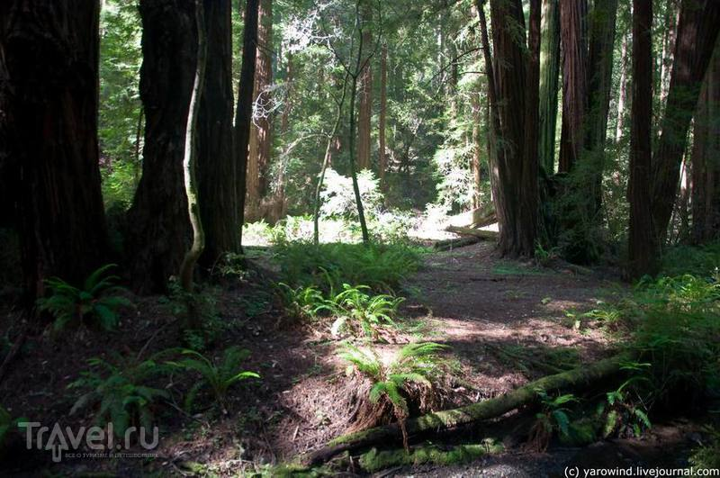 Национальный парк Muir Woods / США
