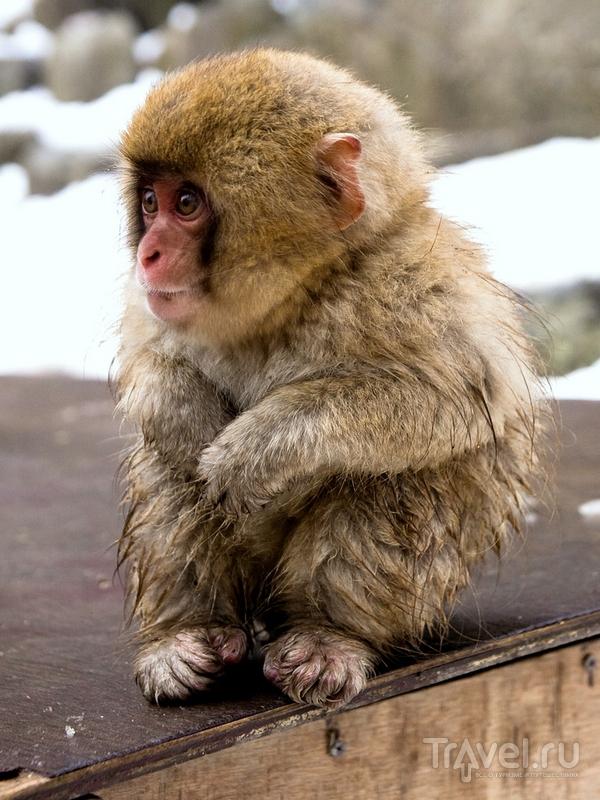 jigokudani_yaen_koen_monkey_park_4.jpg