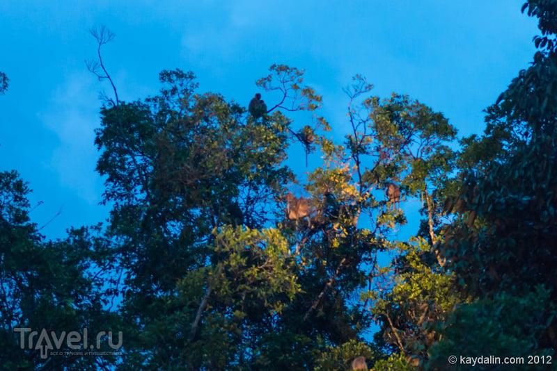Малайзия. Острова TAR National Park и сафари / Малайзия