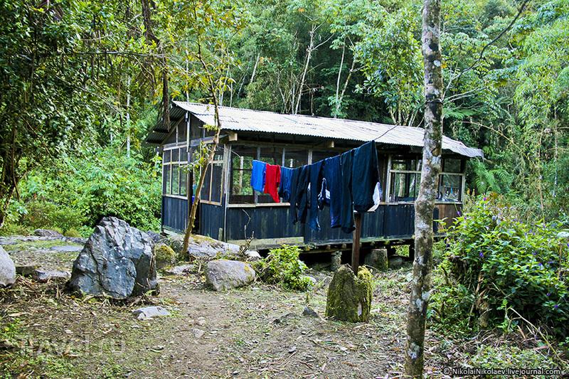Перу. Ману или в поисках диких животных / Перу