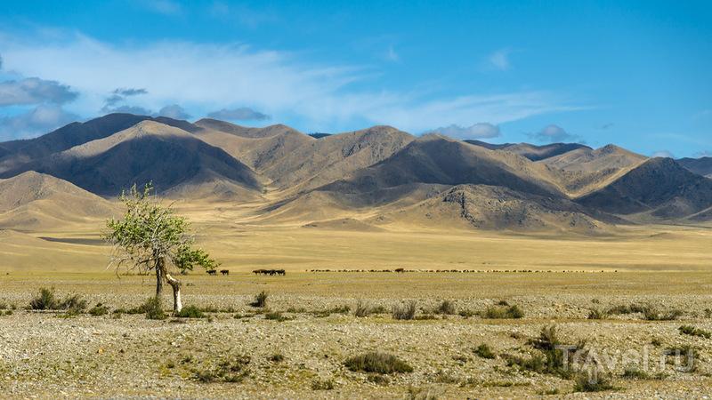 В поисках шамана: Часть 4, Северная Монголия / Монголия