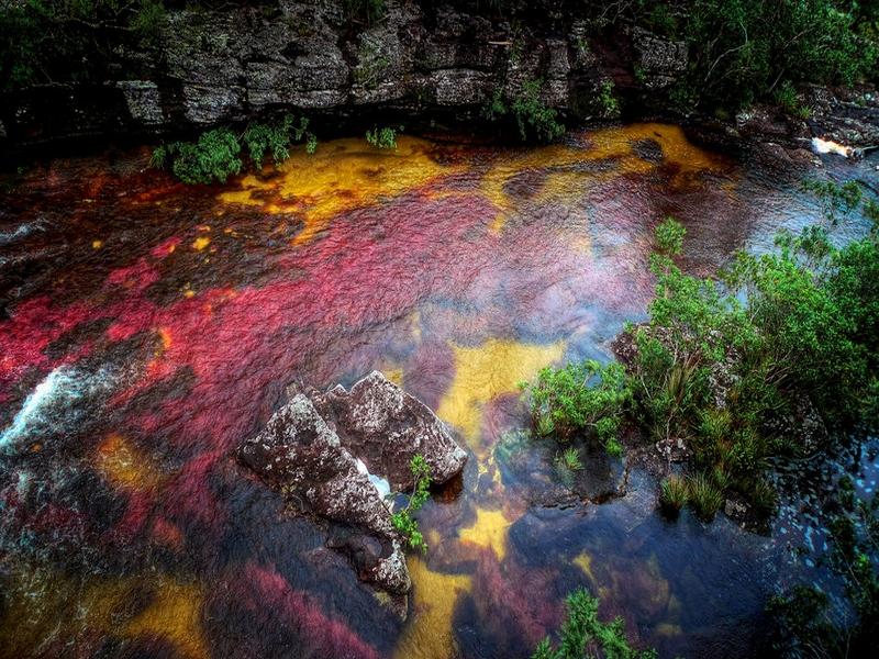 Разноцветная река Каньо-Кристалес в Колумбии / Колумбия
