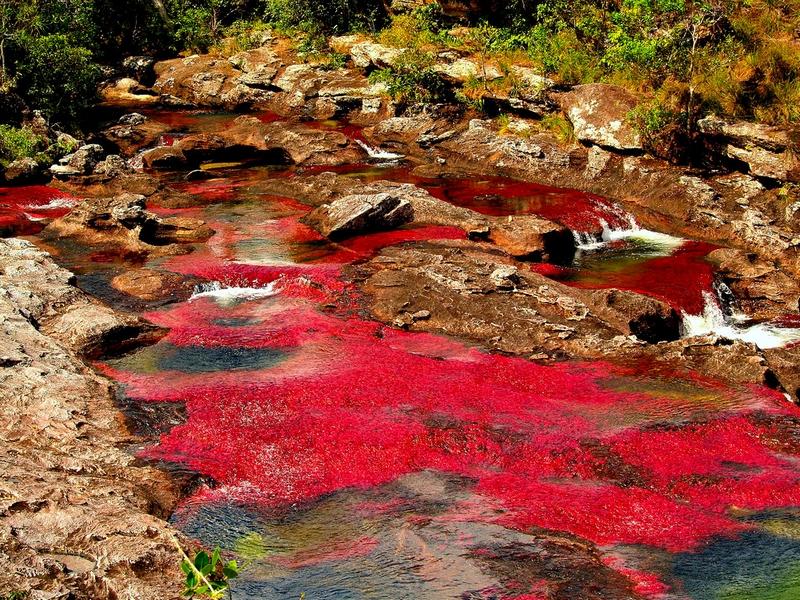 Буйство красок на реке Каньо-Кристалес можно наблюдать в период с июня по ноябрь, Колумбия / Колумбия