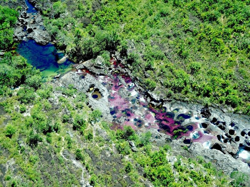 Река Каньо-Кристалес протекает по территории национального парка Серрания-де-ла-Макарена / Колумбия