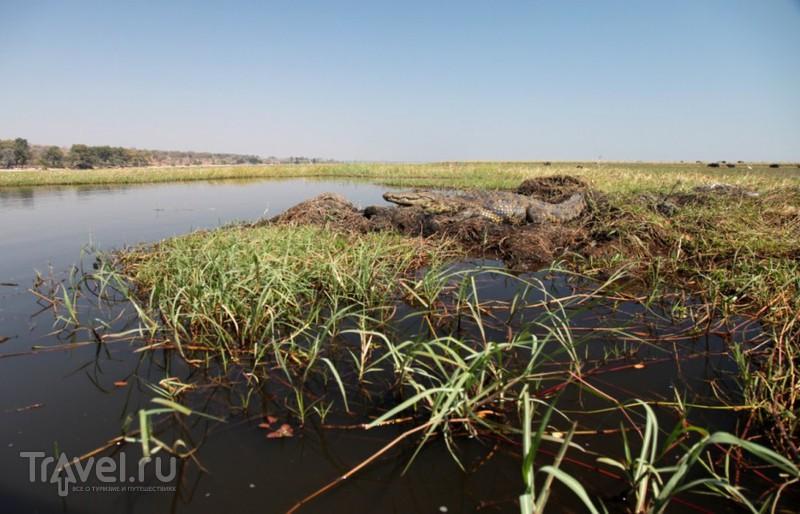 Крокодилы (Африка) / Ботсвана