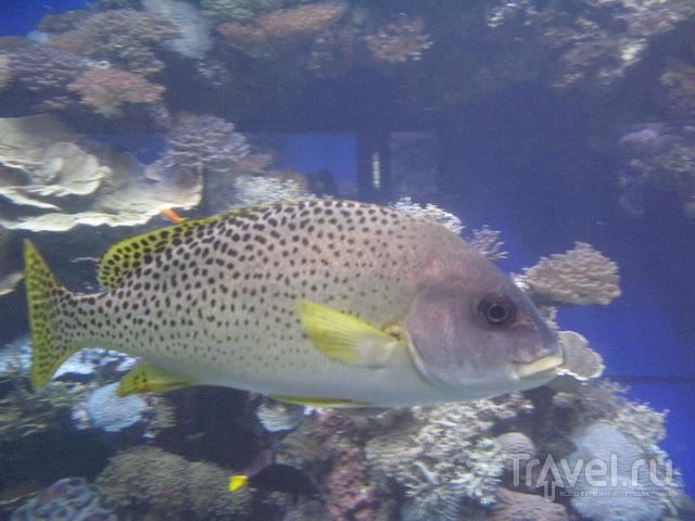 Рыбки Красного моря / Израиль