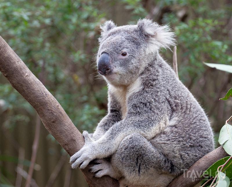 Австралия. Парк рептилий в Госфорде / Австралия