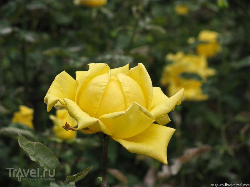 Крым в ноябре. Царица цветов / Украина