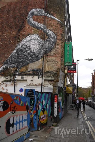 Уличный художник ROA в Лондоне / Великобритания